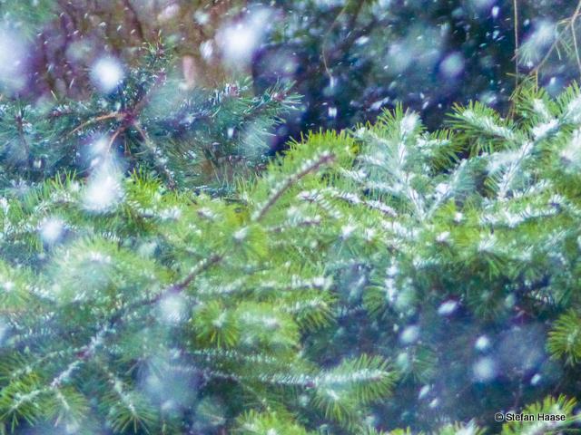 Magic Snow